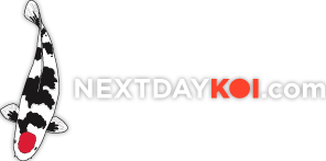 Nextdaykoi Coupon